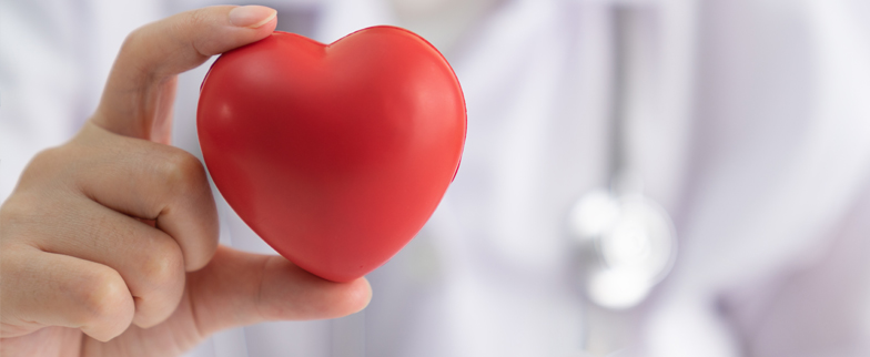 Close up of a physicians hand holding a stress ball in the shape of a heart